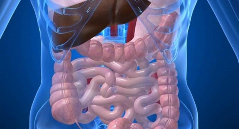 Doenças no intestino