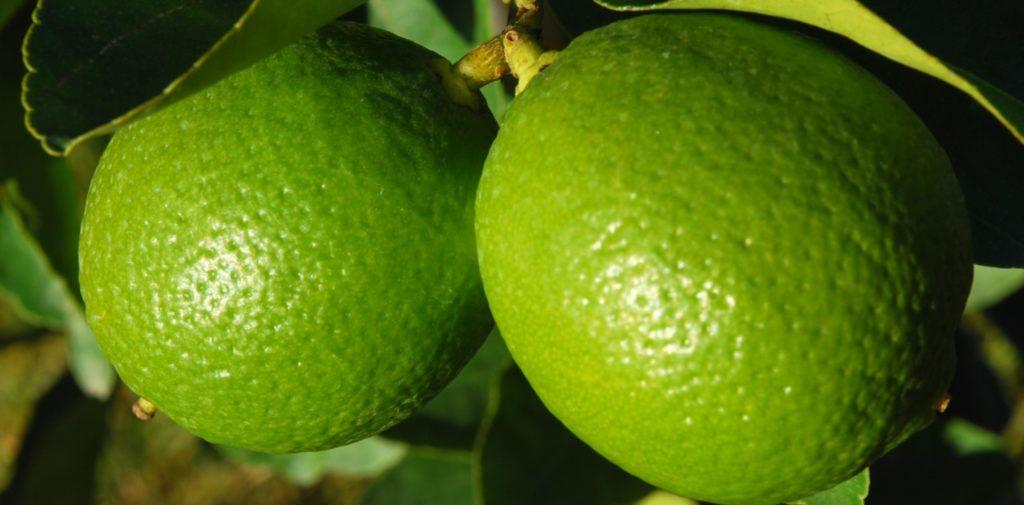 Benefícios da Limonada