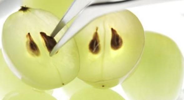 sementes de uva verde