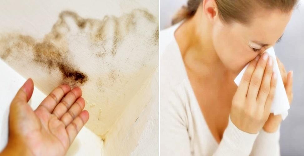 doença do mofo