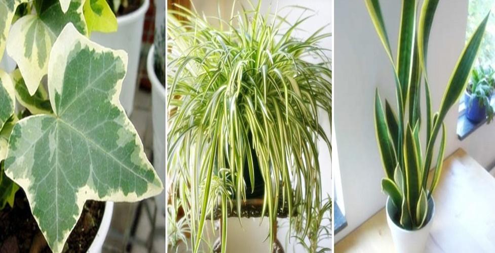 melhores plantas para se ter dentro de casa