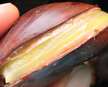 Bebabenefícios da castanha portuguesa