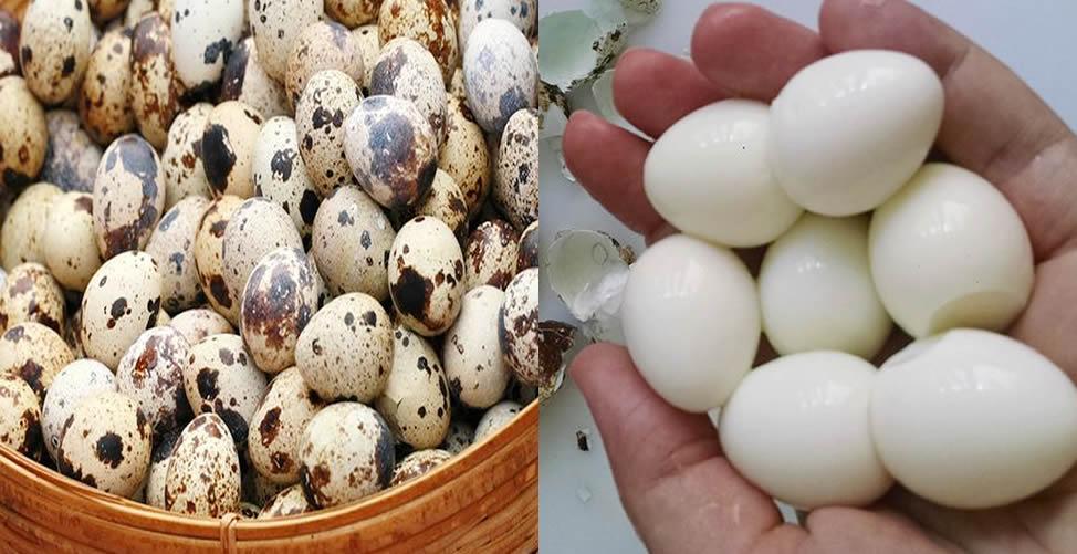 Benefícios do ovo de codorna
