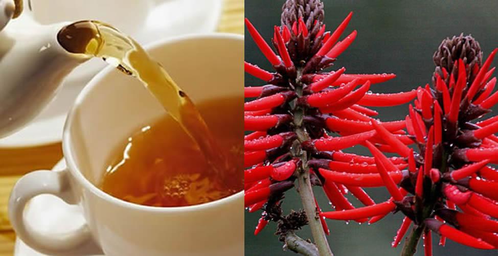 para que serve chá de mulungu