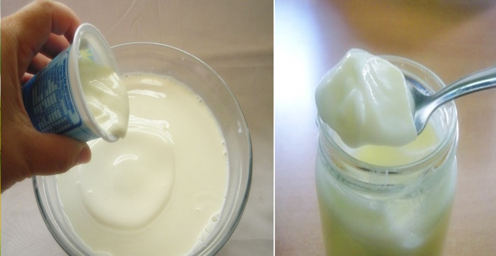 Como fazer iogurte natural