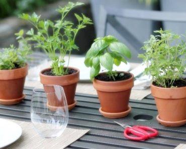 Plantas que protegem o cérebro