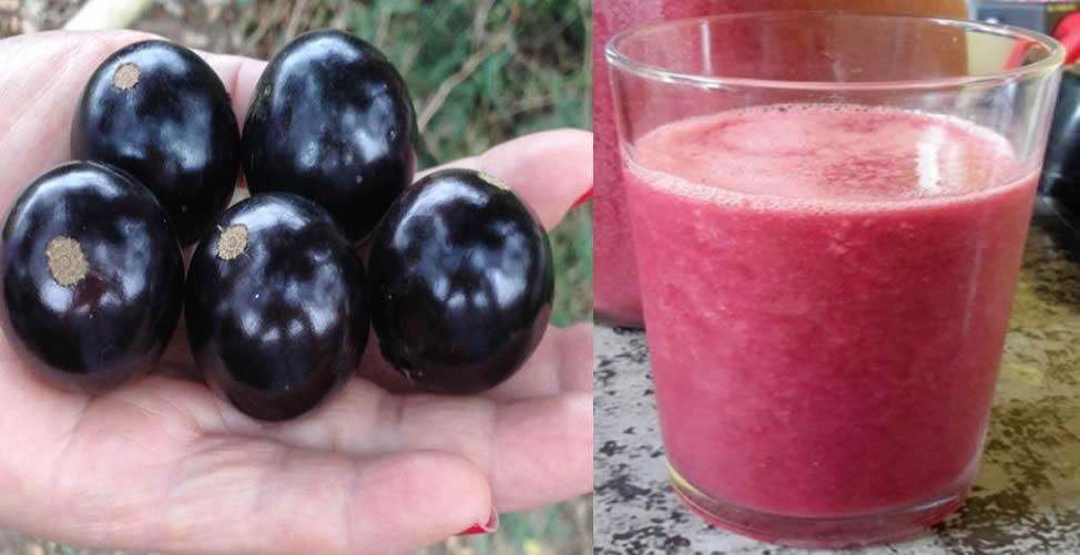 benefícios do suco de jabuticaba