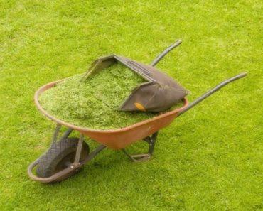 usar as aparas de grama