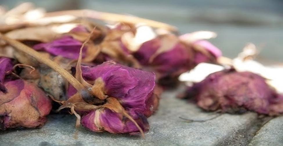 """1 - Coisas """"mortas"""" Isto é, flores secas, animais empalhados, pássaros e até mesmo conchas. Caso você goste de flores naturais, a dica é verificar se estão morrendo rapidamente. Portanto, você deve limpar os vasos com freqüência para espantar as vibrações ruins."""