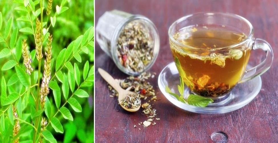Chás e Plantas Medicinais para Impotência