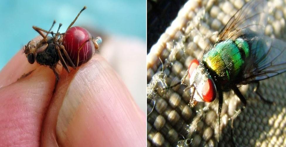 insetos mais perigosos do mundo
