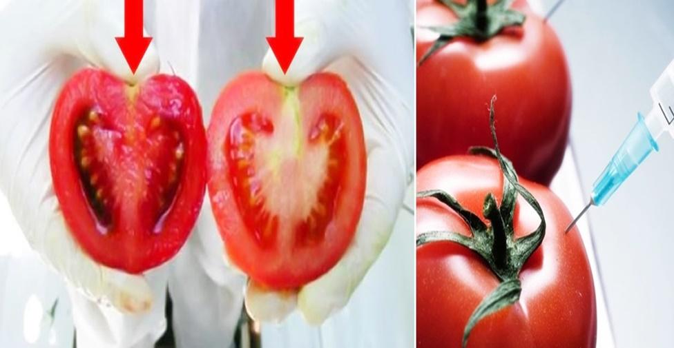 identificar se o tomate tem veneno