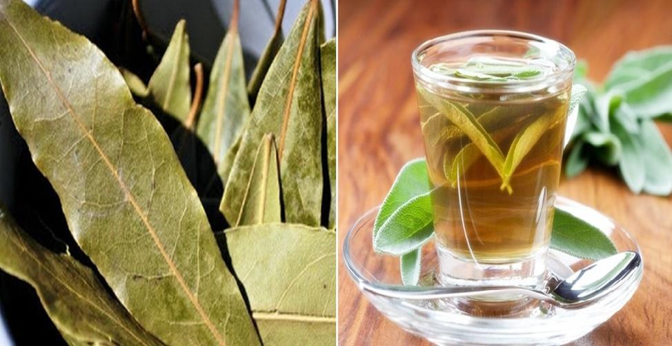 benefícios da folha de louro