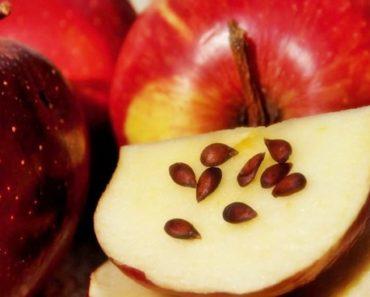 Propriedades das sementes de maçã