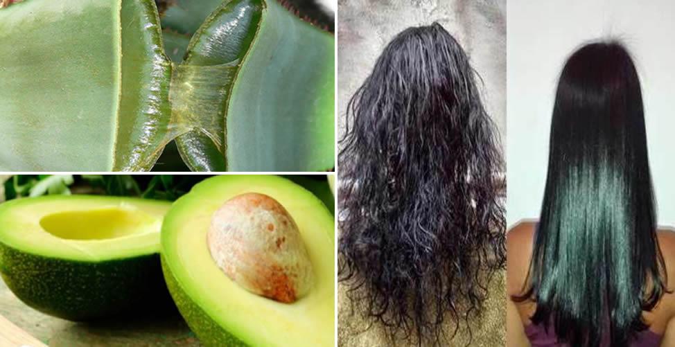 Alisamento Natural para Cabelos Crespos - Babosa com abacate