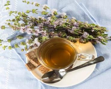 Benefícios-Do-Chá-de-Poejo