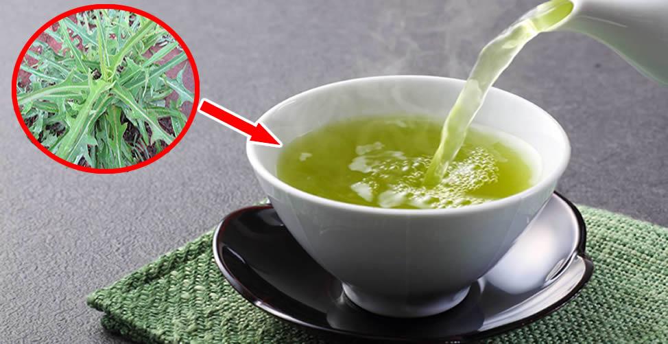 Benefícios da Alface Selvagem em Chá