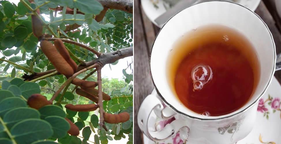 Benefícios do Barbatimão - Chá