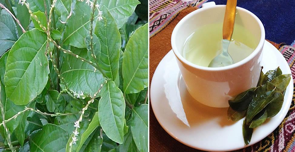 Benefícios do Chá de Guiné