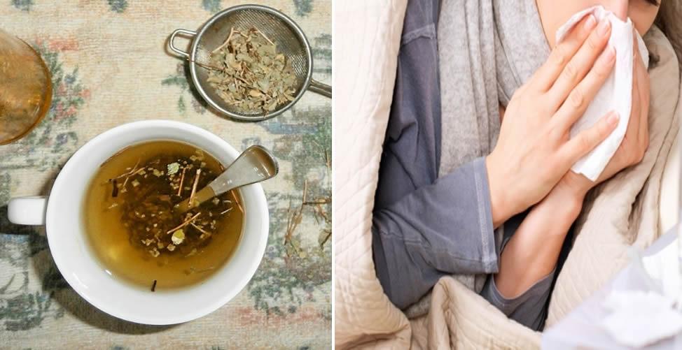 Benefícios do Chá de Orégano Para a Saúde