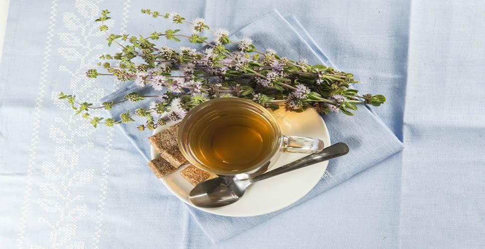 Benefícios do Chá de Poejo-Receita