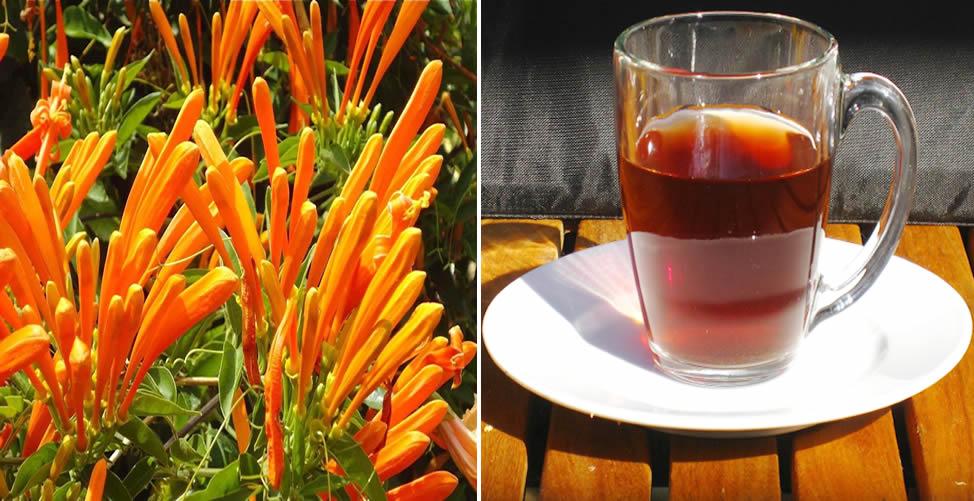 Benefícios do Cipó de São João - Chá