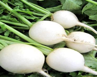 Benefícios-do-Rabanete-Branco