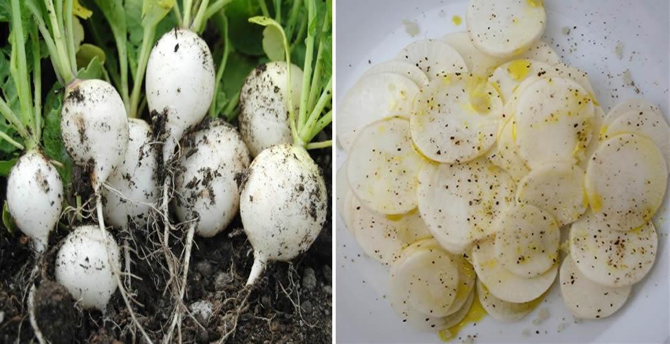 Benefícios do Rabanete Branco-Salada