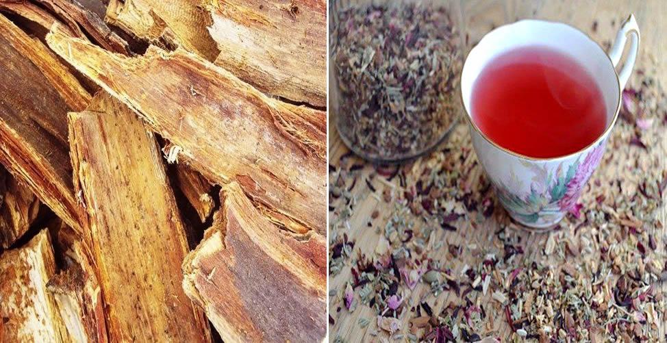 Benefícios do Ypê Roxo - Chá