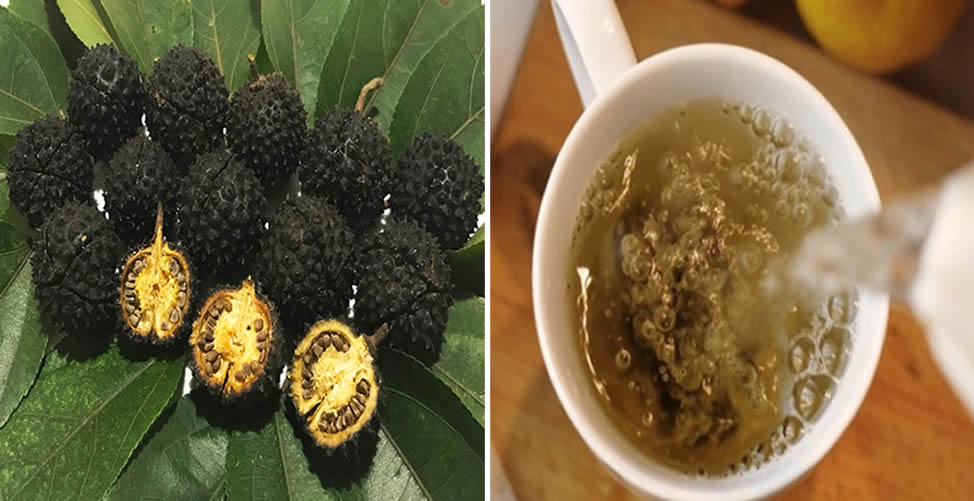 Chá de Mutamba