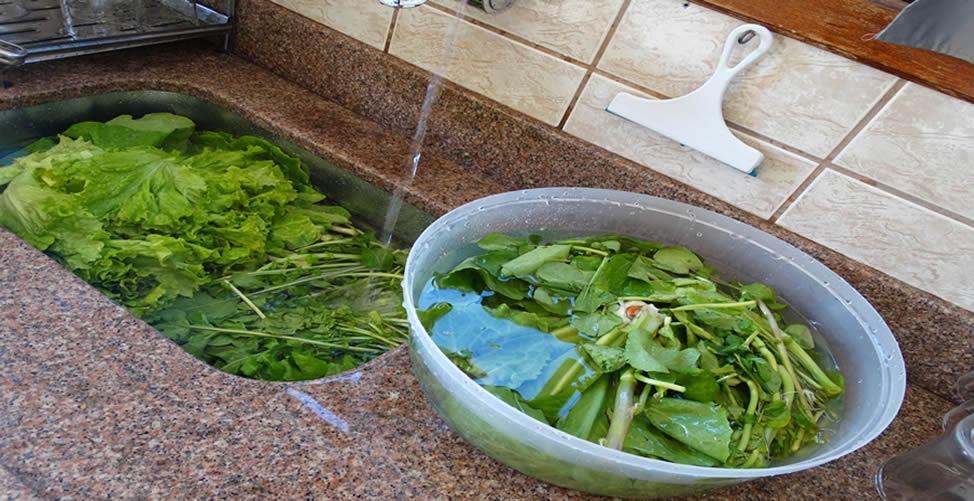 Como Conservar as Verduras por Mais Tempo Sem Usar Plástico