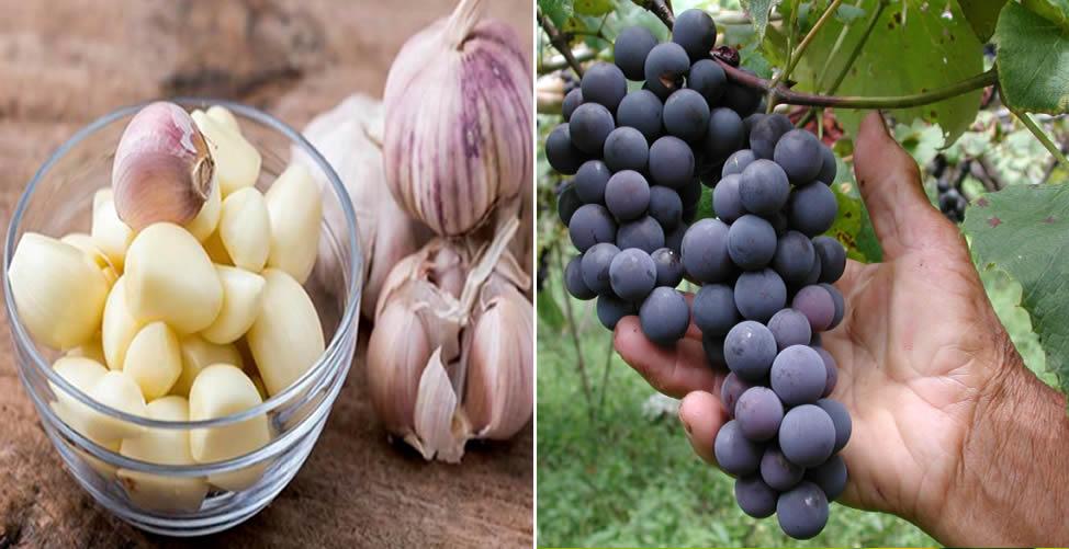 Como Tratar Sopro no Coração - Alimentos