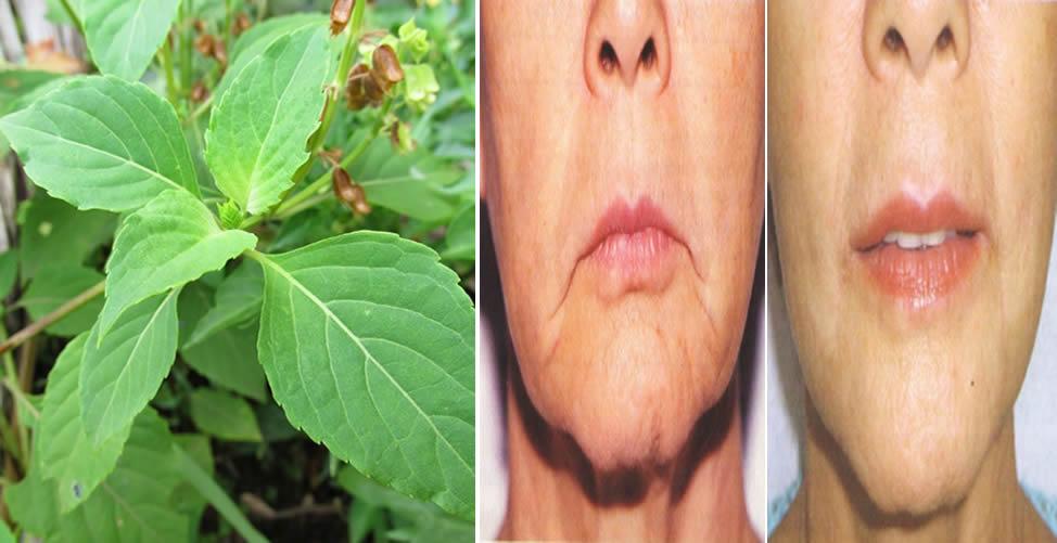 Conheça os Benefícios do Chá de Alfavaca