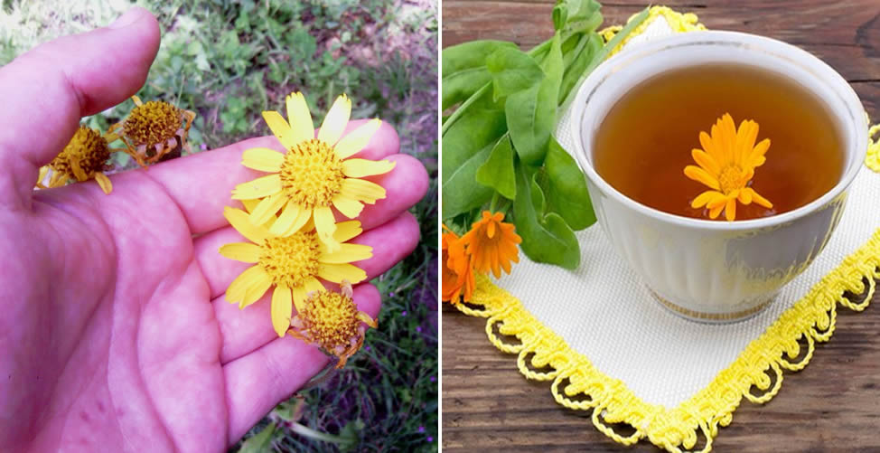 Benefícios da Arnica - Chá