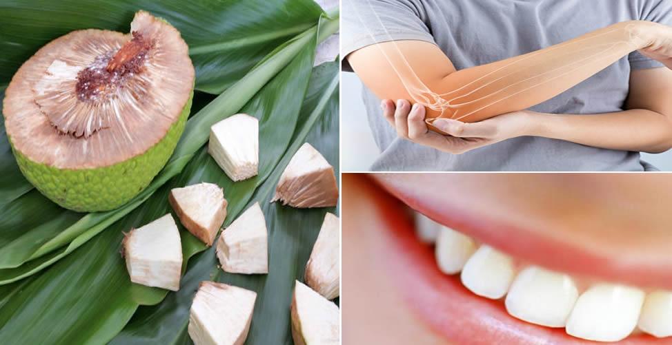 Benefícios da Fruta Pão-Fortalece ossos e Dentes