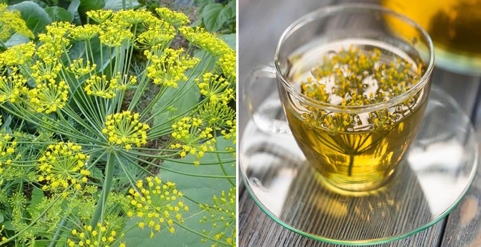 Benefícios do Endro - Chá