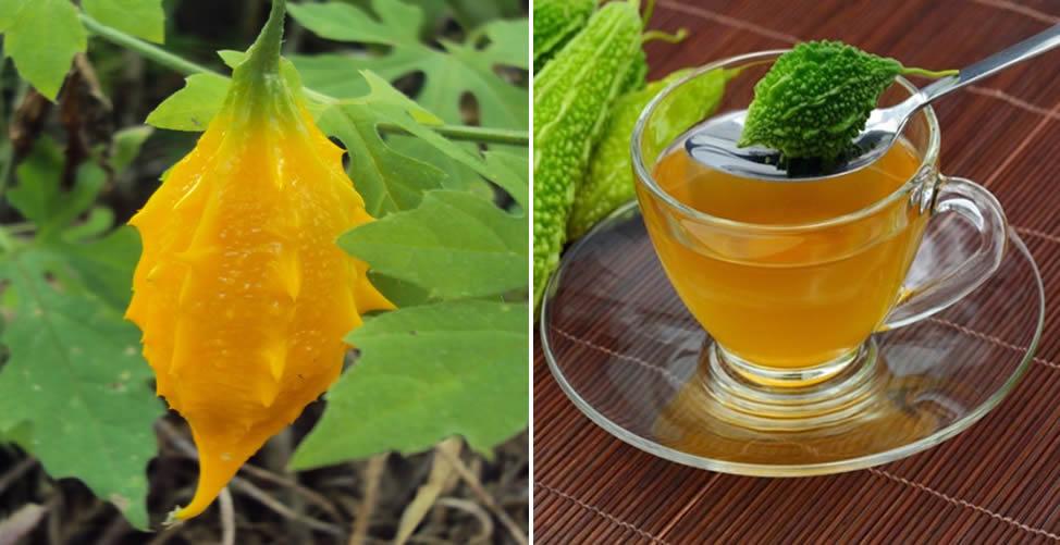 Benefícios do Melão de São Caetano-Chá