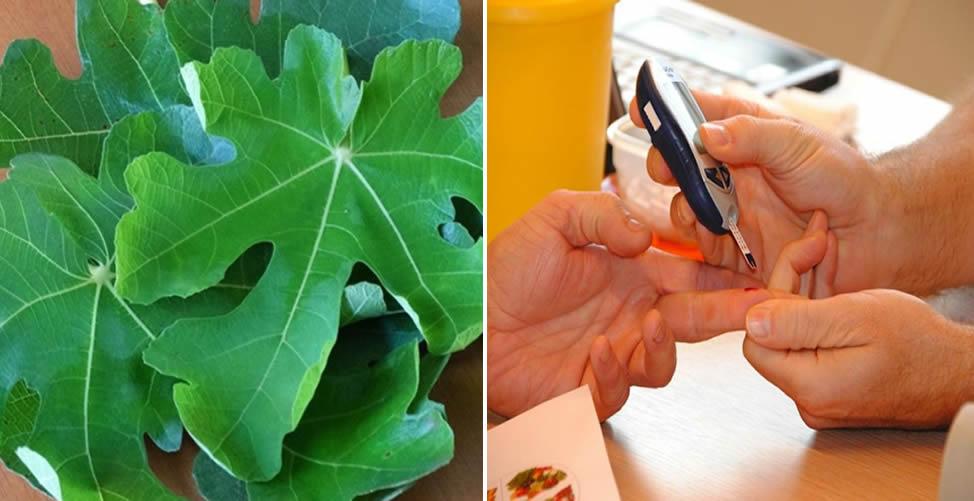 Conheça os Benefícios do Chá de Folha de Figo