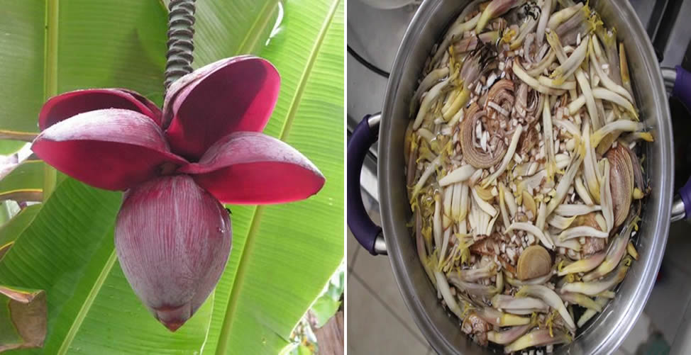 Refogado de Flor de Bananeira