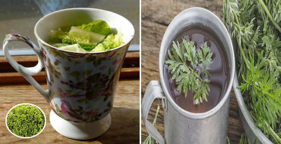 Remédio Caseiro Para Problemas Estomacais - Chá de Alface e Artemísia