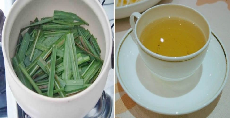 Remédio Caseiro Para Síndrome do Pânico - Chá de erva Cidreira