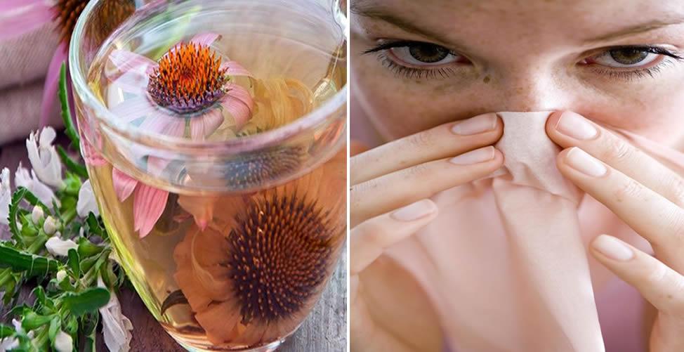 Remédio caseiro Para Sinusite - Chá de Equinácea