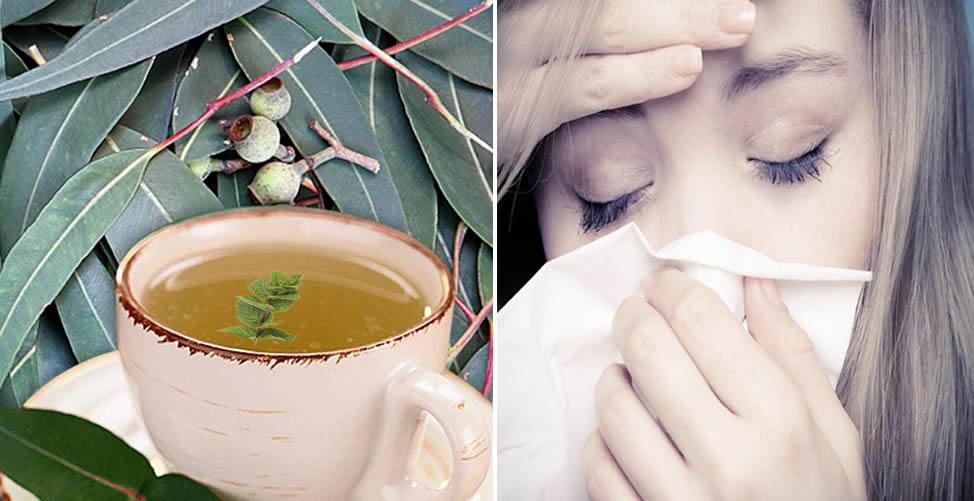 Remédio caseiro Para Sinusite - Chá de Eucalipto com Hortelã