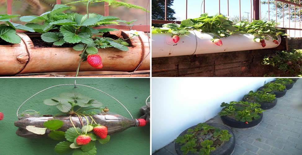 Formas de Como Plantar morango
