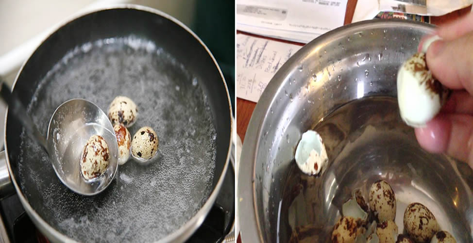 Aprenda Como Descascar ovos de Codorna